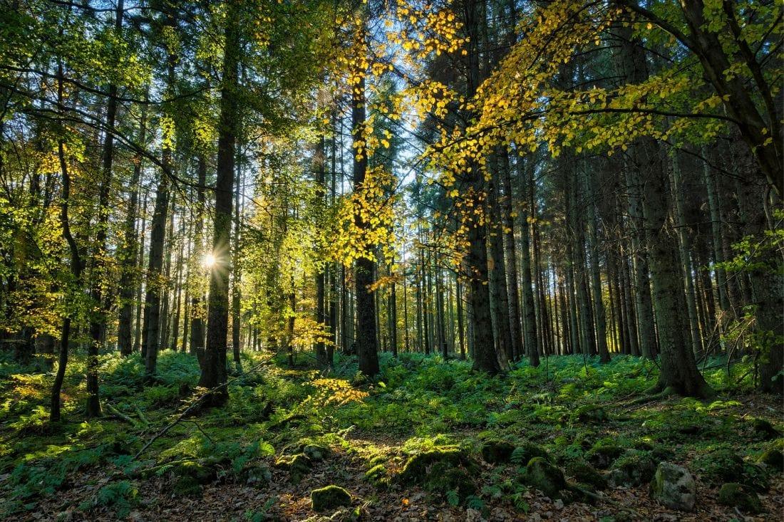 Aberdeenshire Forests