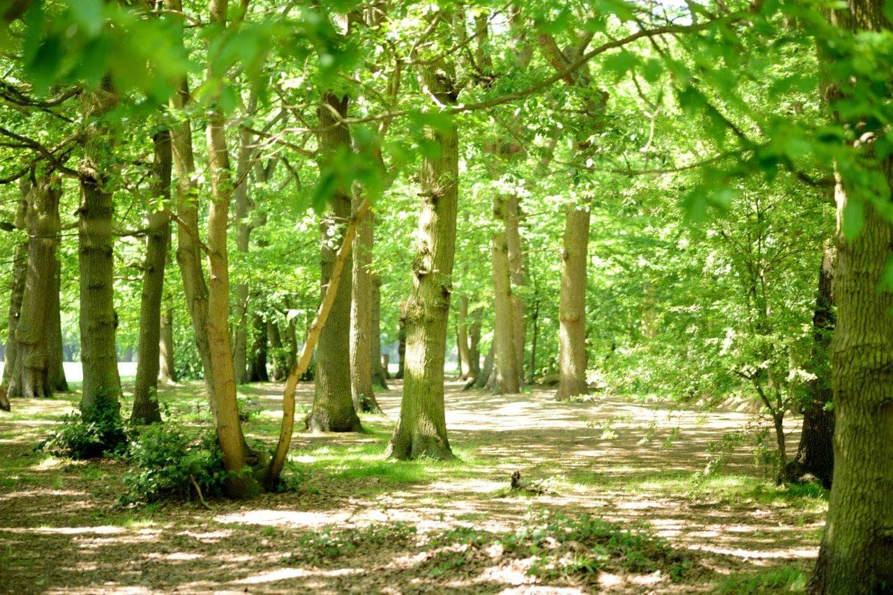 Belfair's Wood
