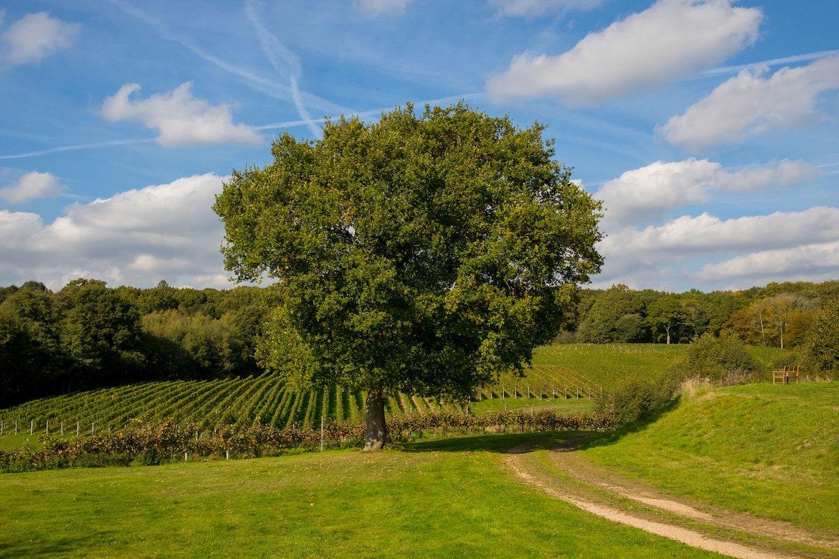 Bluebell Vineyard, Sussex