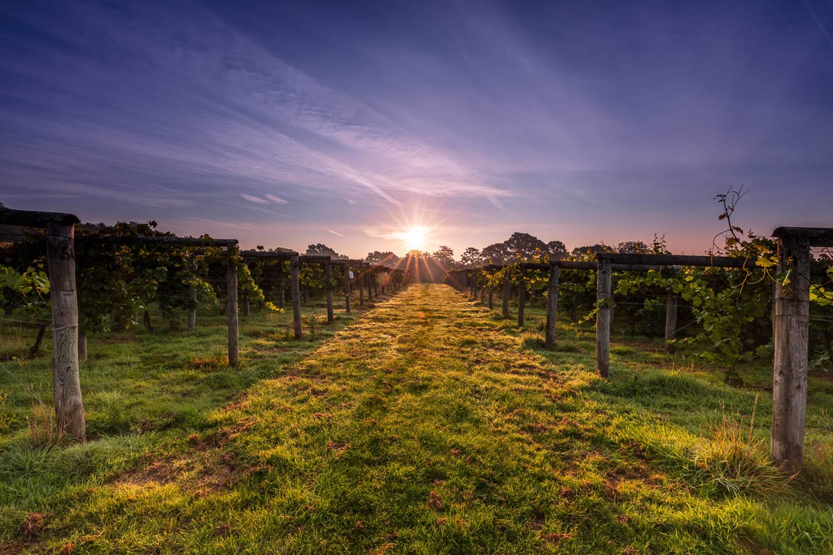 Bolney Wine Estate (Photo: Chris Orange)