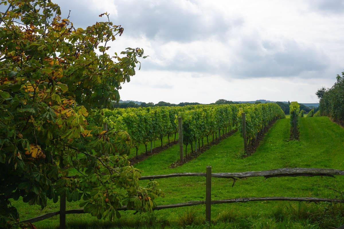 Albourne Estate, West Sussex vineyard tours