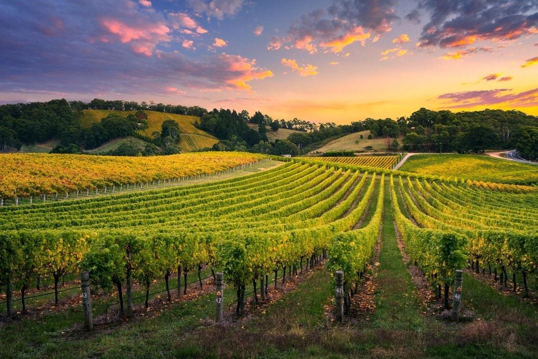 The Best Sussex Vineyard Tours