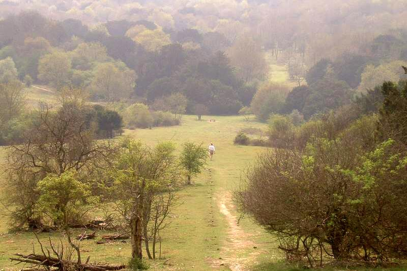 kingley vale national park