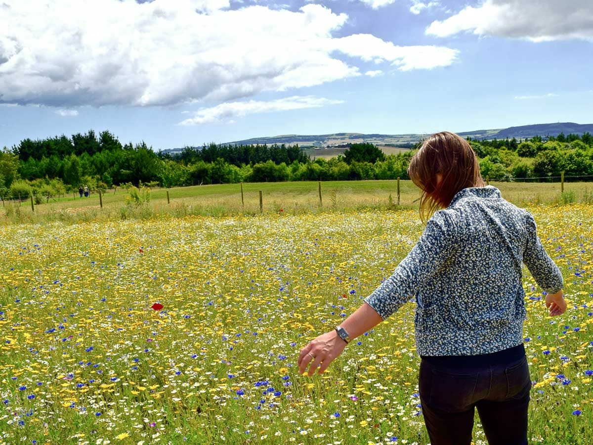 Exploring fields of wildflowers in Buckinghamshire