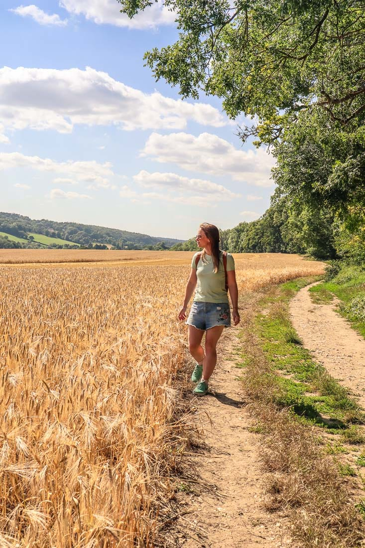 Beautiful field of wheat near Latimer on the Chess Valley Walk
