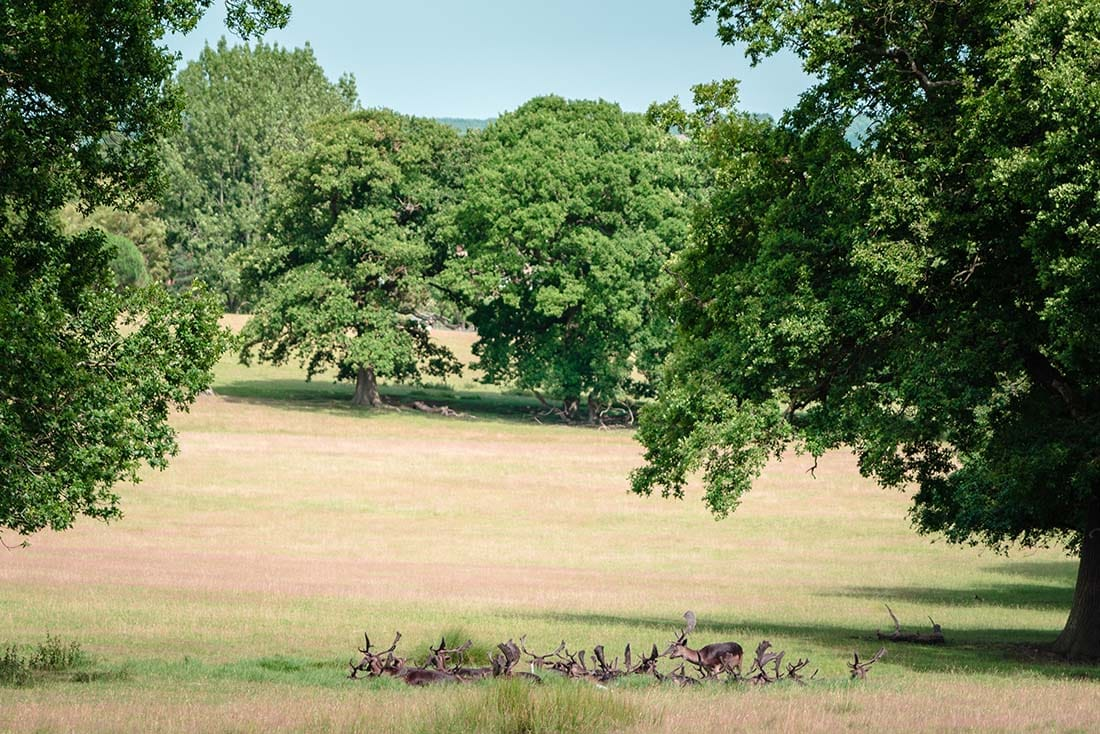 epping forest deer sanctuary