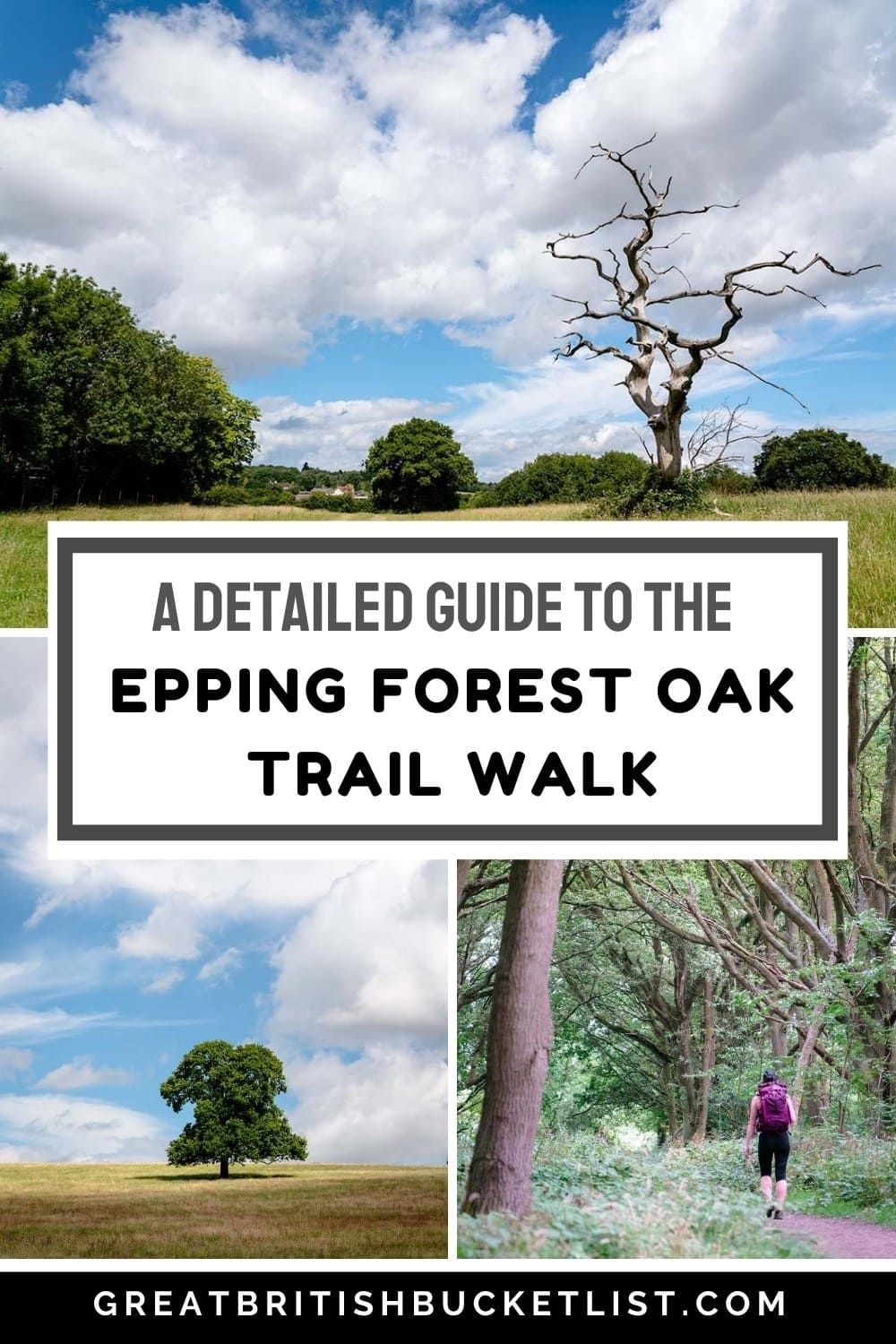 A Detailed Guide to the Epping Forest Oak Trail Walk