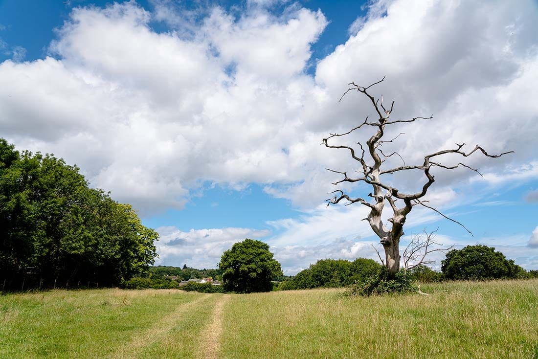 epping forest oak trail
