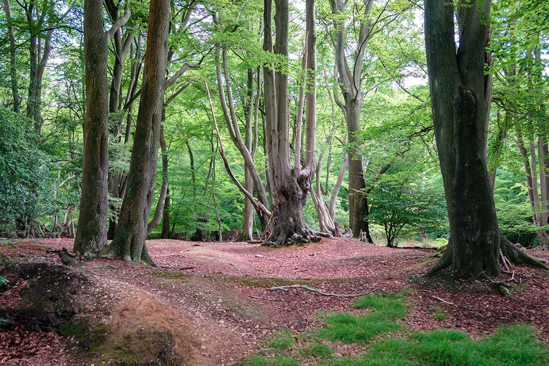 epping forest trail