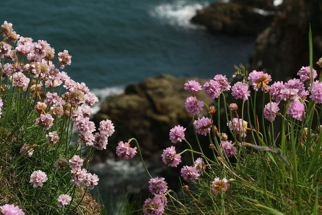 spring in scotland