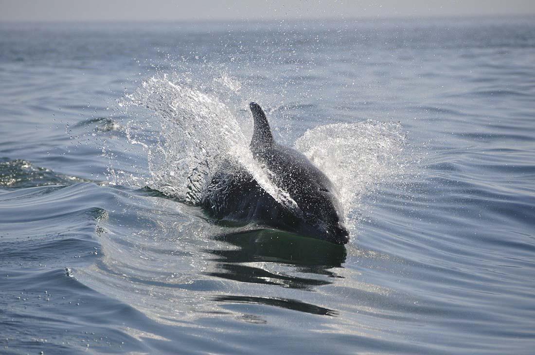dolphin spotting scotland