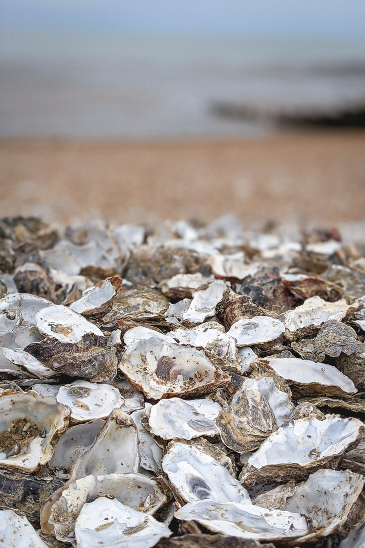 Oyster shells on the beach in Whitstable