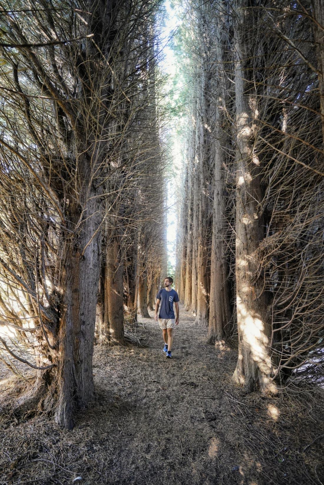 bedgebury pinetum trees