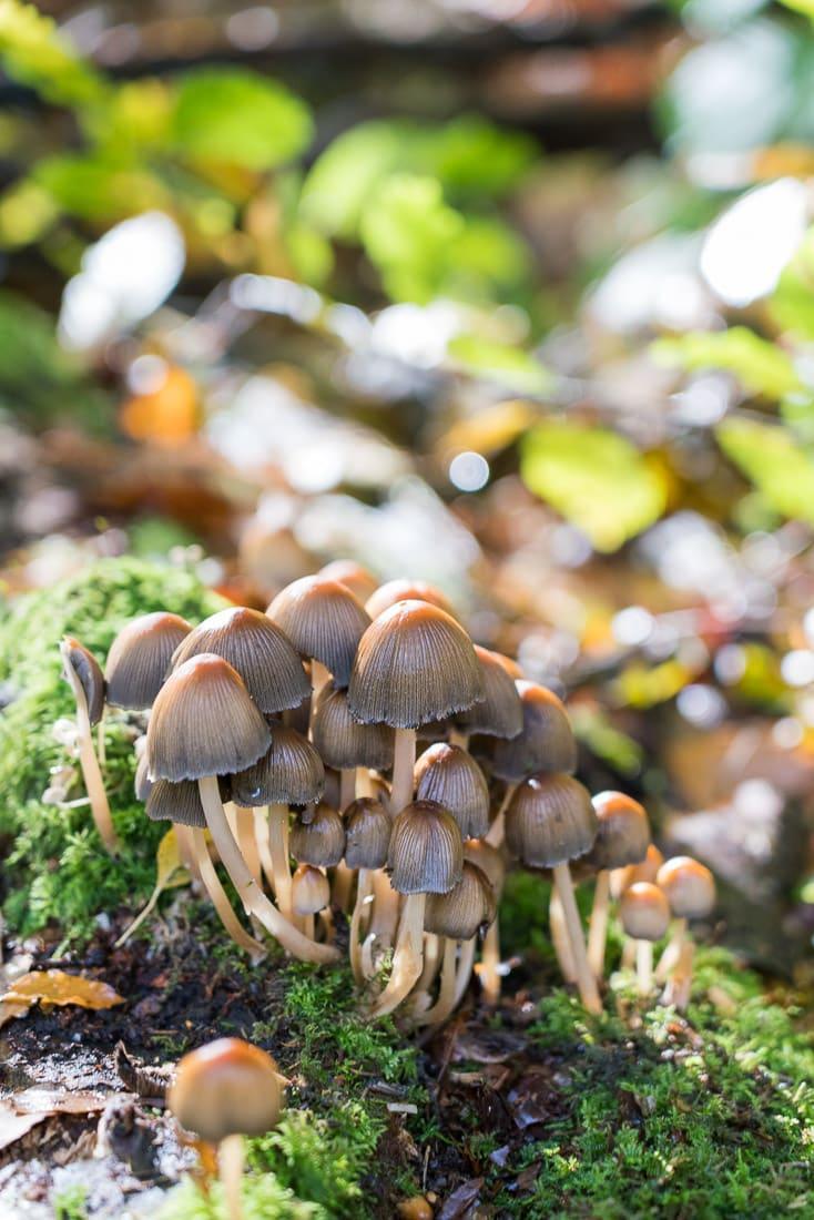 Mushrooms in Penn Wood