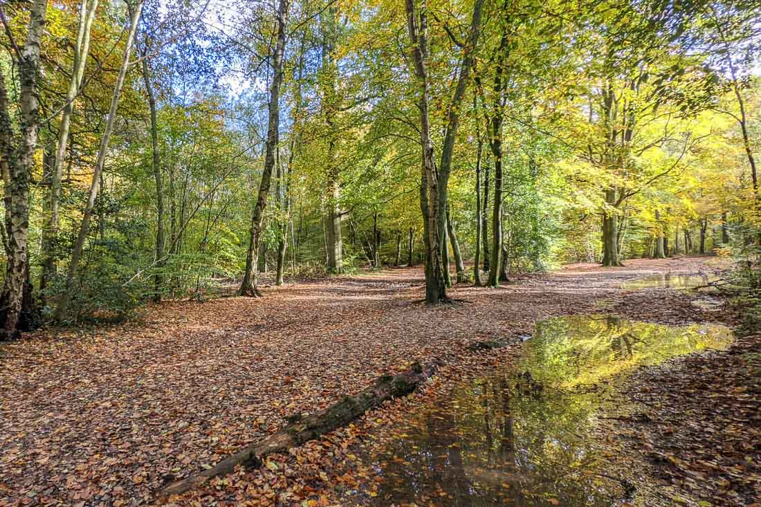A Detailed Guide To Visiting Penn Wood, Buckinghamshire