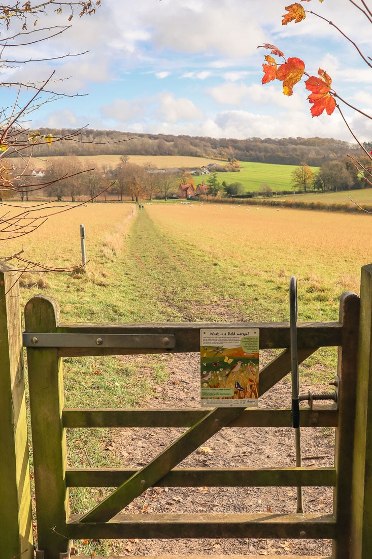 Pretty views through the gate towards Chequers Estate