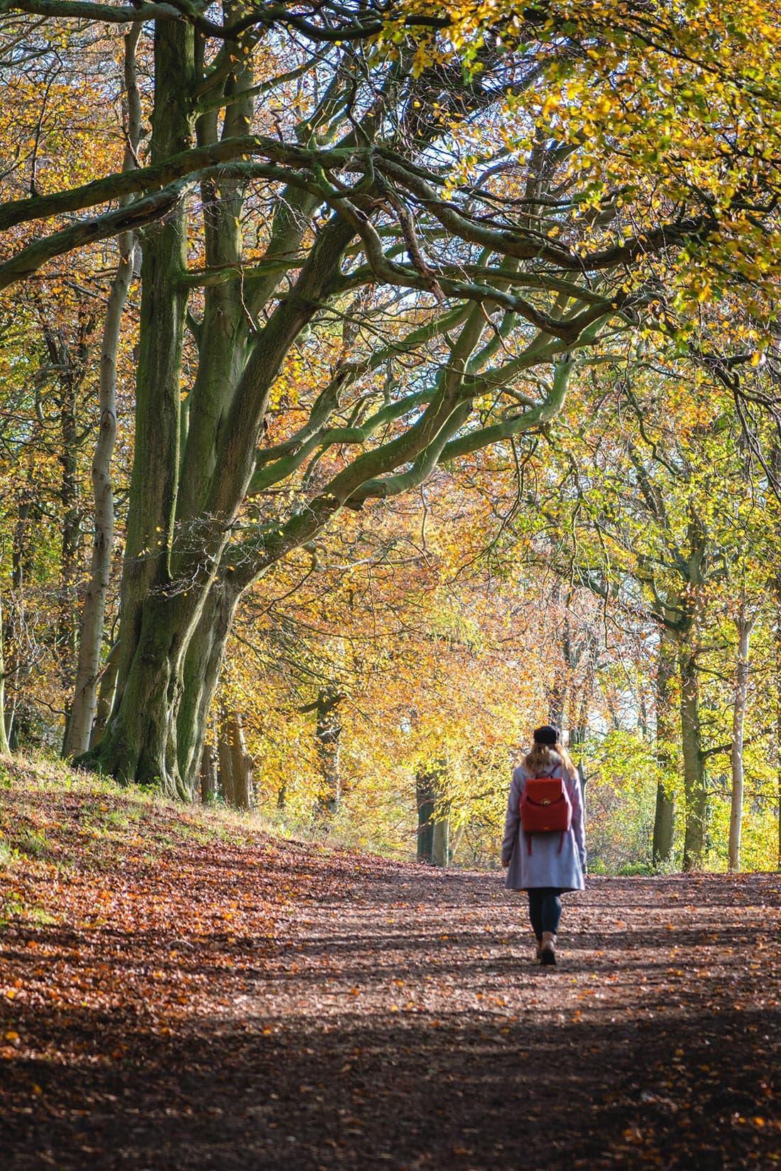walks in buckinghamshire