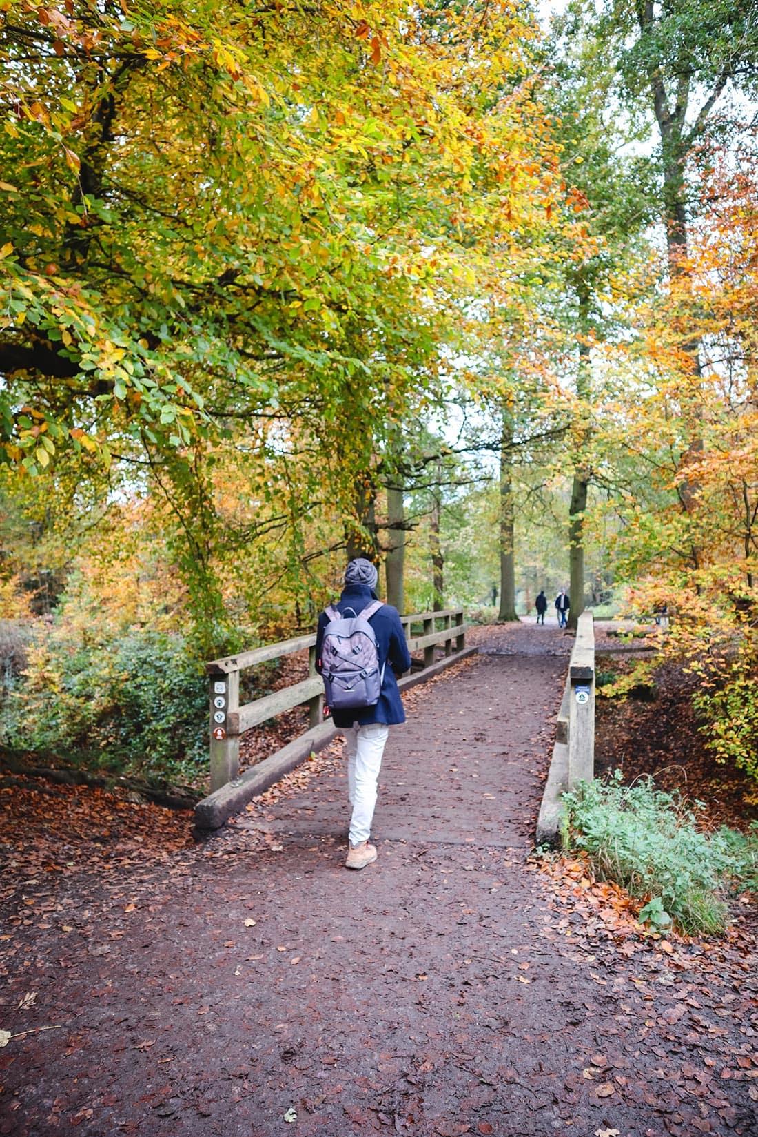 wooden bridge ashridge estate