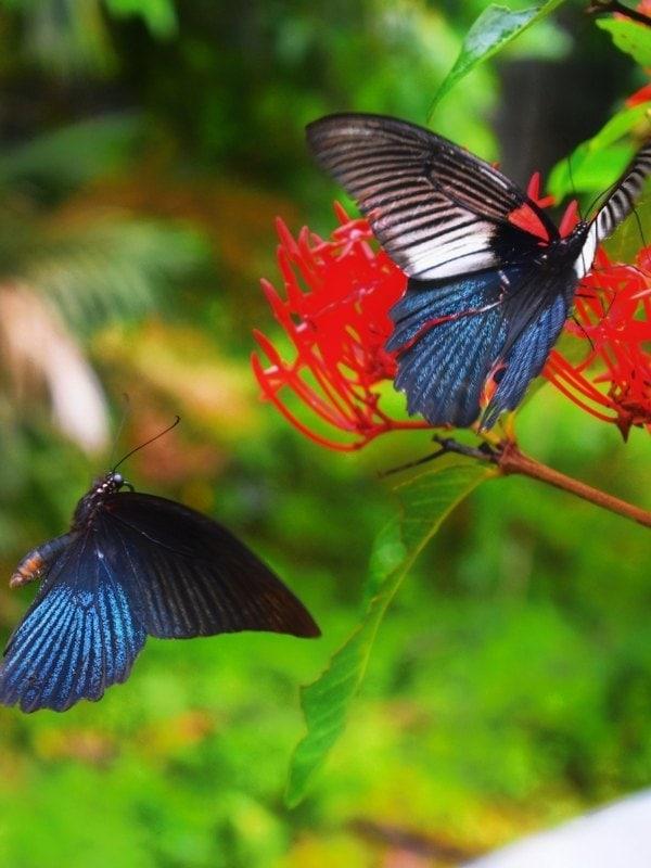 Wye Valley Butterfly Zoo