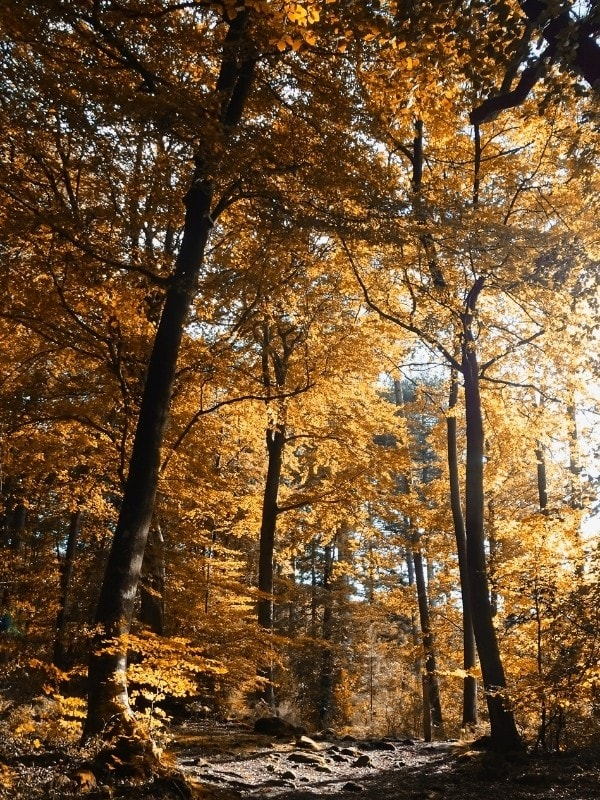 Autumn colours in the Forest of Dean