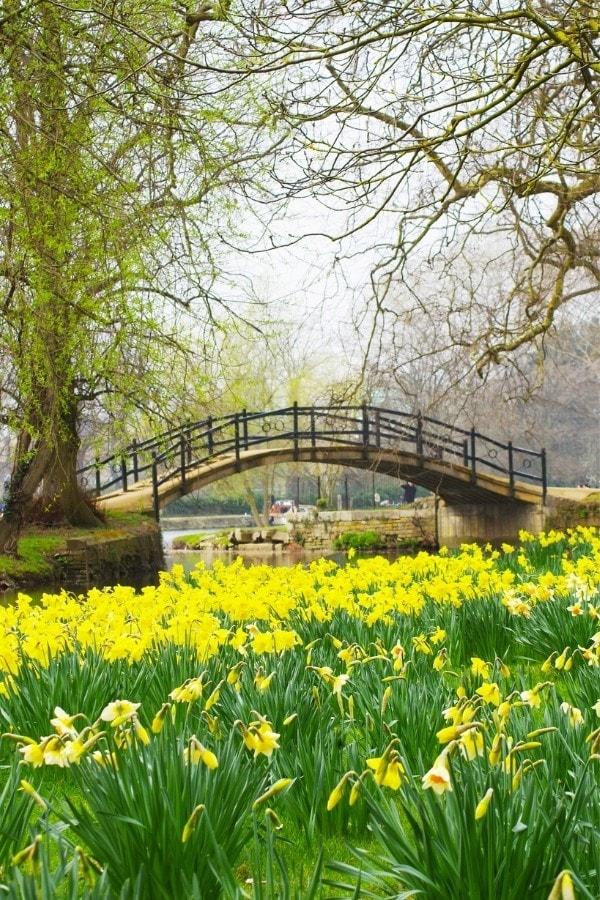Spring in Oxford