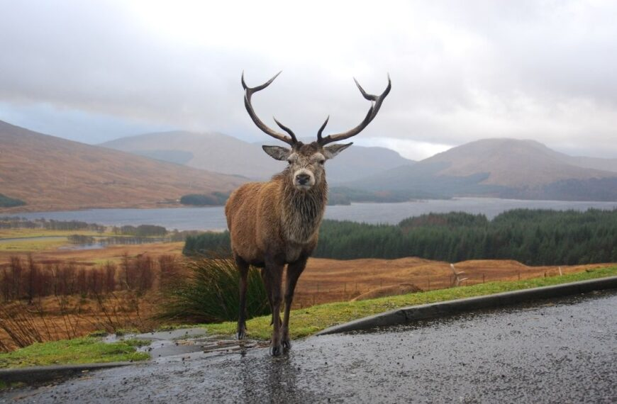 28 Fun Facts About Scotland That Will Blow Your Mind