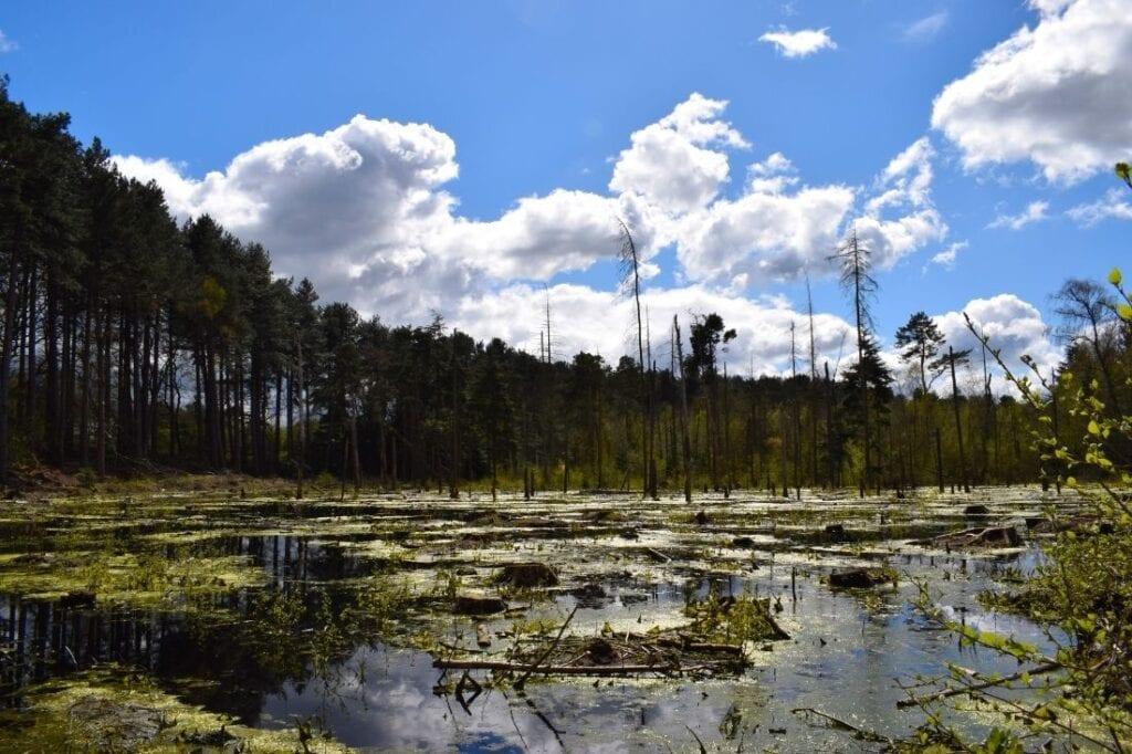 delamere forest walks