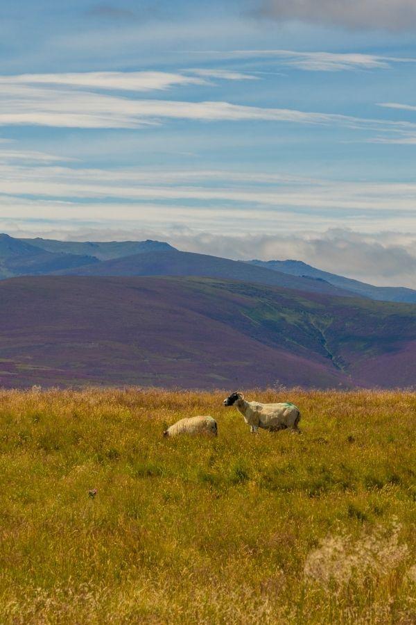 Cairgorms National Park, Scotland