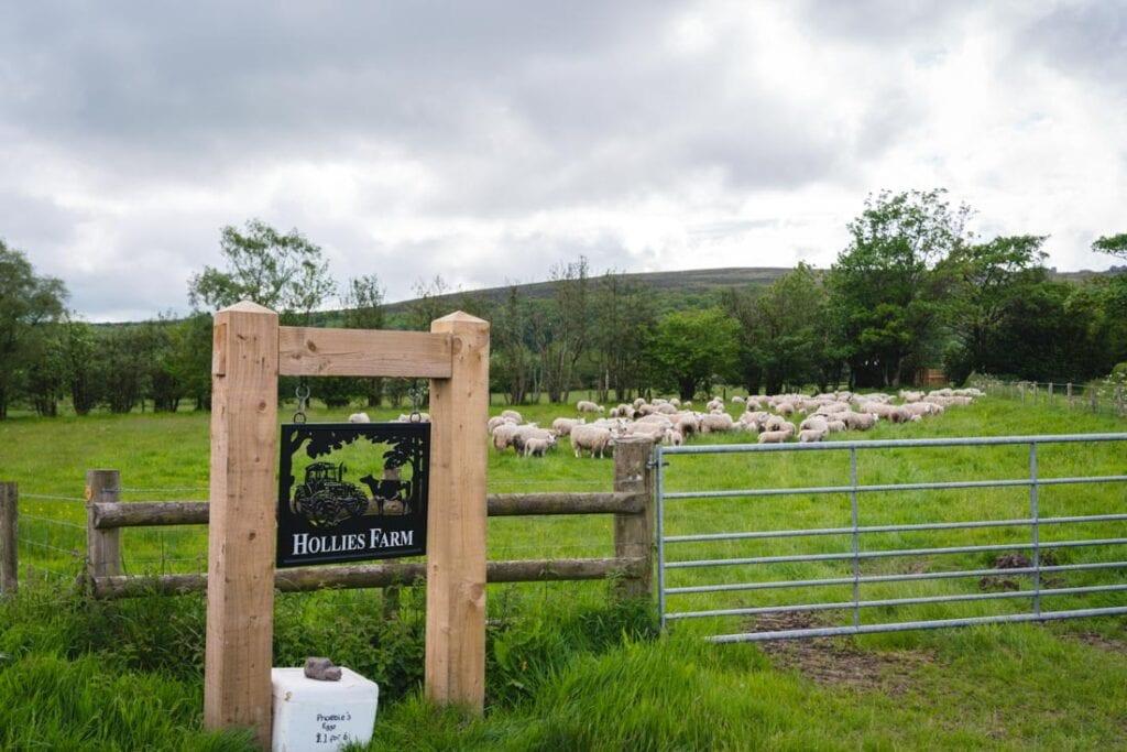 mollies farm shropshire